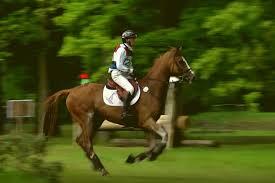 paardenevenementen